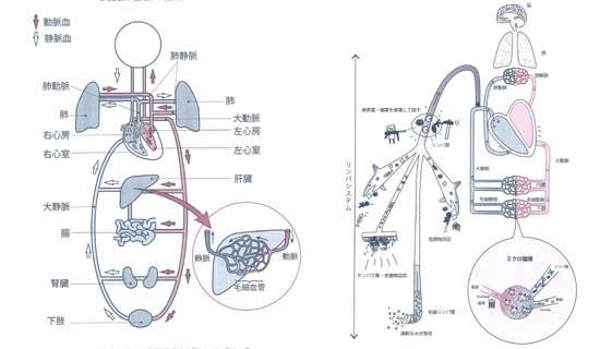 リンパシステム